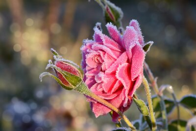 Cuadro flores 529