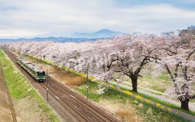 Cuadro Flores de cerezo o Sakura y tren local
