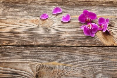 Cuadro Flores de orquídea rosa sobre un fondo de madera