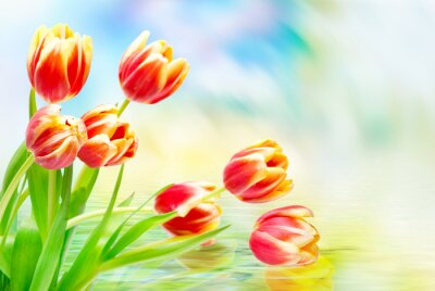 Cuadro Flores de tulipanes de cerca