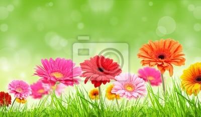 Cuadro Flores gerber colores