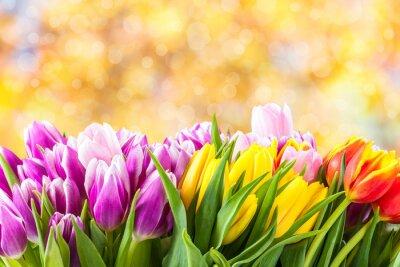 Cuadro Flores hermosas del tulipán