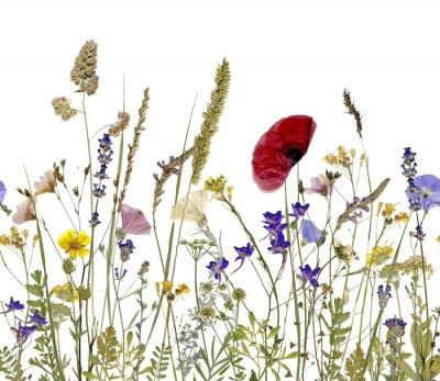 Cuadro Flores y hierbas