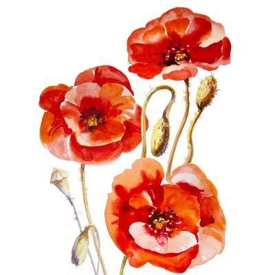 Cuadro Flower field poppy