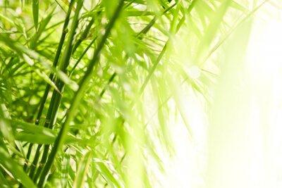 Cuadro Fondo de bambú verde