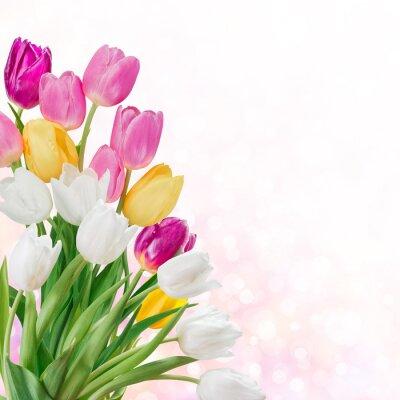 Cuadro Fondo de la primavera