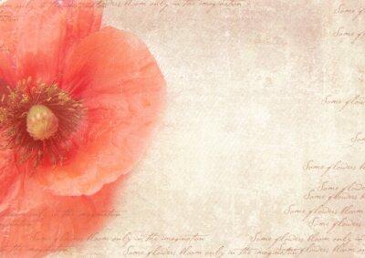 Cuadro Fondo retro sucio con flores de amapola. Un collage de estilo de la vendimia con las flores de amapola, se desvaneció de escritura a mano en el papel viejo en mal estado. Plantilla de la postal.
