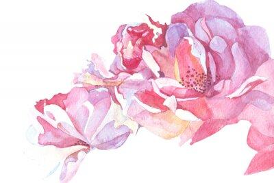 Cuadro Fondo rosa ilustración acuarela