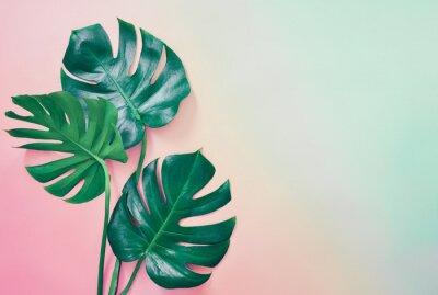 Cuadro Fondo tropical de verano