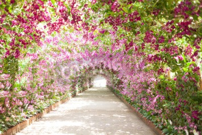 Cuadro footpath in a botanical garden with orchids lining the path.