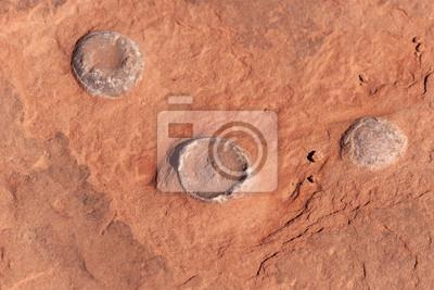 Fósil de dinosaurio Huevo