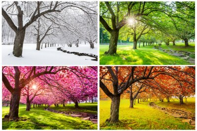 Cuadro Four seasons with japanese cherry trees in Hurd Park, Dover, New Jersey