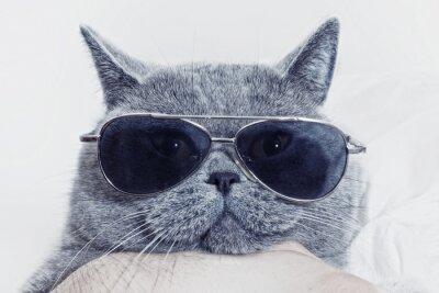 Cuadro Funny muzzle of gray cat in sunglasses