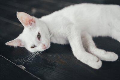 Cuadro Gato gatito poco suave fondo blanco dentro
