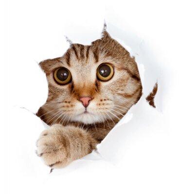 Cuadro gato que mira para arriba en el lado del agujero de papel rasgado aislado
