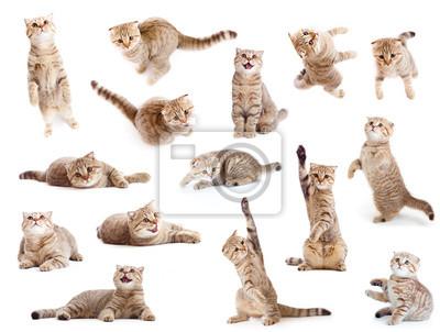 Cuadro gato y gatito aislados conjunto británico rayas