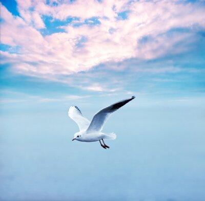 Cuadro gaviota alza contra un cielo nubes