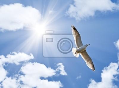 gaviota bajo el sol brillante