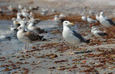 Cuadro Gaviota en la playa