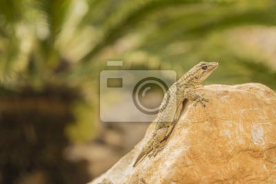Gecko con la piedra y la palmera en el fondo