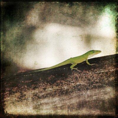 Cuadro Gecko Verde Cameleon Lagarto en la rama de madera de Brown