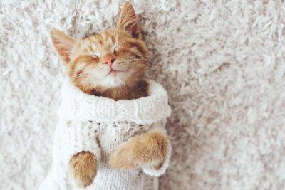 Cuadro Gigner gatito