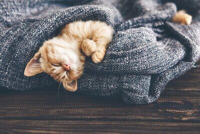 Cuadro Gigner gatito durmiendo