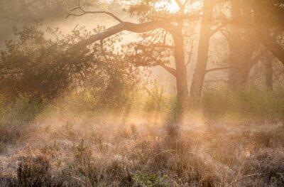 golden sunrise light in fog