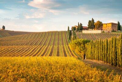 Cuadro Golden vineyards in autumn at sunset, Chianti Region, Tuscany, Italy