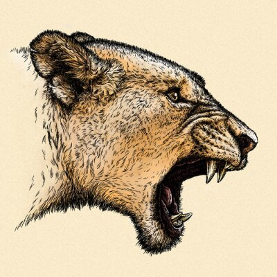 Cuadro Grabar león ilustración