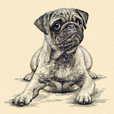 Cuadro Grabar perro ilustración
