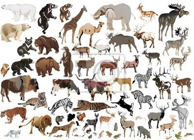 gran colección de animales de color