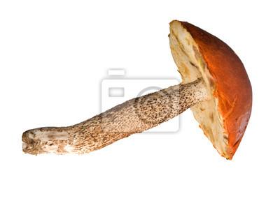 Cuadro gran hongo de naranja-cap