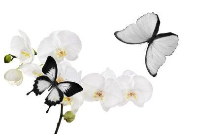 Cuadro grandes flores de orquídeas blancas y dos mariposas