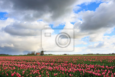 Grandes nubes sobre tulipanes rosas y un molino de viento