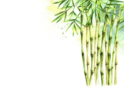 Cuadro Green bamboo background, stems and leaves, Asian rainforest. Watercolor hand drawn  isolated illustration