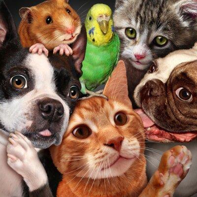 Cuadro Grupo de mascotas