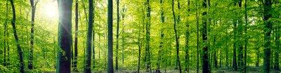 Cuadro Haya Panorama del bosque del paisaje