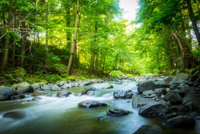 Cuadro Hermosa corriente de montaña de ensueño en el bosque