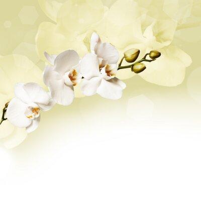 Cuadro Hermosa orquídea blanca
