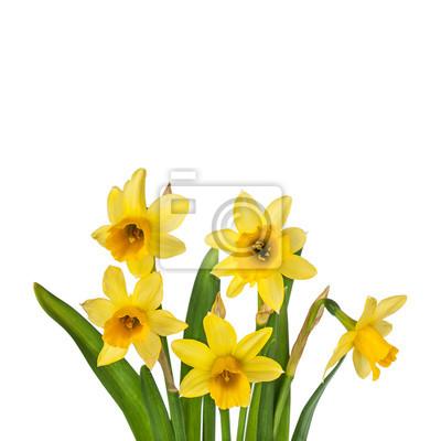 Hermosas Flores De Narcisos Amarillos En El Florero Pinturas Para La - Narcisos-amarillos