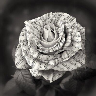 Cuadro Hermoso blanco y negro rosa con nota en los pétalos