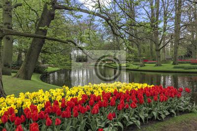 Hermoso cielo azul en la granja de bulbos de tulipán durante la primavera en Lisse, Países Bajos