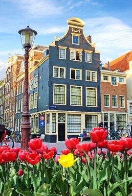 Cuadro Hermoso paisaje con los tulipanes y casas en Amsterdam, Holanda