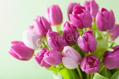 Cuadro Hermoso tulipán púrpura flores de fondo
