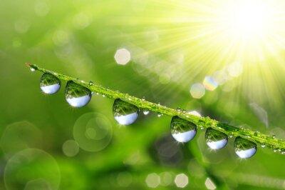 Cuadro Hierba verde fresca con gotas de rocío de cerca. Fondo de la naturaleza