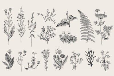 Hierbas Y Flores Silvestres Botanica Conjunto Flores Del Vintage
