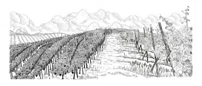 Cuadro Hill of vineyard landscape with city, clouds on horizont hand drawn sketch vector illustration isolated on white