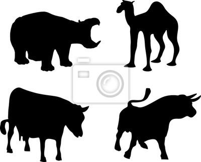hipopótamos, búfalos, vacas y camellos