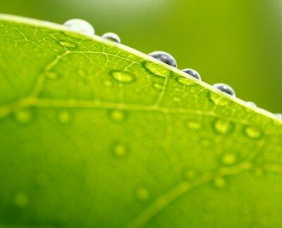 Cuadro Hoja fresca fondo verde